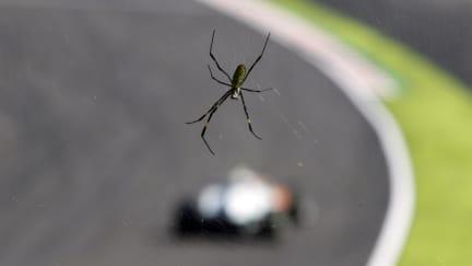 2011 Japanese Grand Prix - Saturday