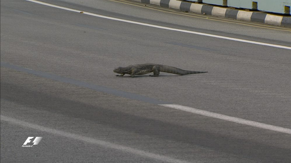 FP3: 'There's a giant lizard on the track!'