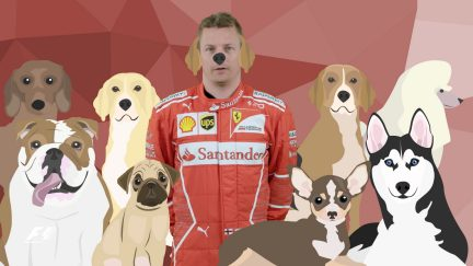 Quickfire F1 - What's your favourite animal?