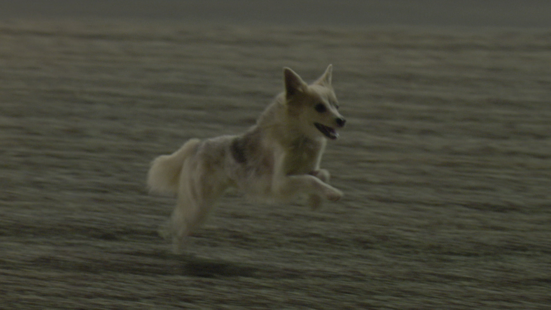 Bark-rain Grand Prix: Dog on track causes red flag in F1 practice