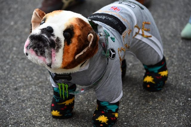 A fans interpretation of Lewis Hamilton's dog Roscoe. Formula One World Championship, Rd15, Japanese Grand Prix, Practice, Suzuka, Japan, Friday, 3 October 2014 © Sutton Images. No reproduction without permission
