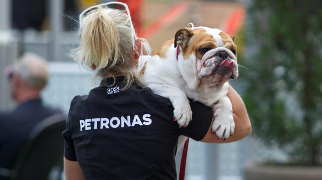 Roscoe, the dog of Lewis Hamilton (GBR) Mercedes AMG F1 at Formula One World Championship, Rd18, United States Grand Prix, Preparations, Circuit of the Americas, Austin, Texas, USA, Thursday 20 October 2016. &copy&#x3b; Sutton Images